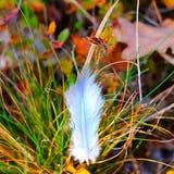 Foto van witte veer op het gras in het bos Royalty-vrije Stock Foto's