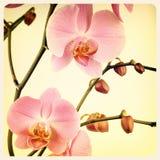 Foto velha da orquídea fotografia de stock