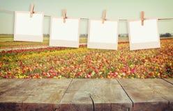 A foto velha do polaroid molda a suspensão em uma corda com a tabela da placa de madeira do vintage na frente da paisagem da flor Imagens de Stock