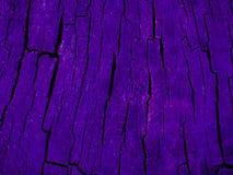 Foto verdadeiramente surpreendente de uma textura de madeira do close up sob uma luz roxa ultra de incandescência Fotos de Stock