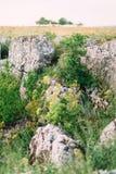 A foto vertical agradável das montanhas cobertos de vegetação com a grama grossa verde O dia ensolarado Fotografia de Stock Royalty Free