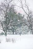 Foto vertical da queda de neve no parque Árvores na neve fotos de stock