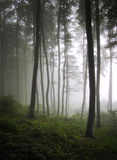 Foto vertical de un bosque verde con niebla Fotografía de archivo