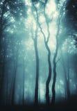 Foto verticale degli alberi in una foresta con nebbia fotografia stock libera da diritti