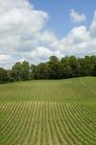 Verticale del campo di cereale Immagine Stock Libera da Diritti