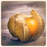 Foto vieja de la fruta del Physalis Foto de archivo libre de regalías