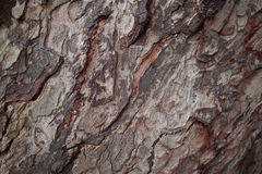Foto vieja de la textura del primer de la corteza de roble Primer rústico del tronco de árbol Imagenes de archivo