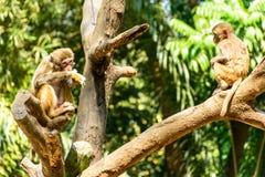Foto von Affen auf der Niederlassung Lizenzfreies Stockfoto