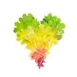 Foto von bunt verlässt in der Herzform lokalisiert auf Weiß lizenzfreies stockfoto