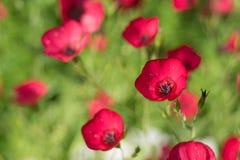 Foto von den schönen Blumen belichtet durch die Sonne Lizenzfreie Stockfotos