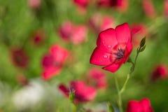 Foto von den schönen Blumen belichtet durch die Sonne Stockbild