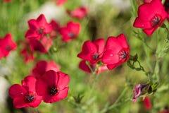Foto von den schönen Blumen belichtet durch die Sonne Stockfotografie
