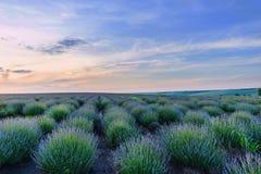 Foto von grünen und purpurroten Blumen Lizenzfreie Stockfotos