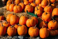 Foto von schönen Kürbisen des im Freien am lokalen Markt Landwirts am sonnigen Herbsttag lizenzfreie stockfotos