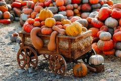 Foto von schönen Kürbisen des im Freien am lokalen Markt Landwirts am sonnigen Herbsttag lizenzfreies stockfoto
