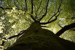 Foto wurde am Cedarvale Park, Toronto gemacht Stockbild