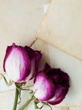 Foto y rosas viejas Imagenes de archivo