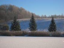 Fotoachtergrond met een de winterlandschap van snow-covered bomen en drie bomen, royalty-vrije stock fotografie