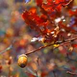 Fotoachtergrond met eikels op een tak met bladeren van eik Stock Afbeelding