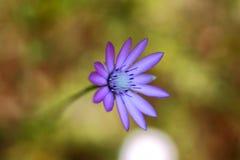 Fotoachtergrond met purpere bloem Royalty-vrije Stock Afbeeldingen