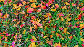 Fotoachtergrond van groen gras met gevallen gekleurde bladeren Royalty-vrije Stock Afbeelding