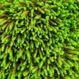 Fotoachtergrond van groen mos Royalty-vrije Stock Afbeeldingen