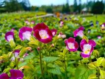 Fotoaufnahmeblume in taman bunga nusantara u. in x28; Blume garden& x29; , Indonesien stockfotos