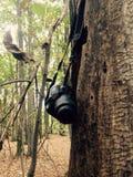 Fotocamera in het bos Stock Afbeeldingen