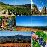 Fotocollage van de wijngaard royalty-vrije stock fotografie