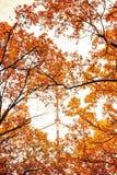 Fotoet av den orange höstskogen med sidor och TV står högt Fotografering för Bildbyråer