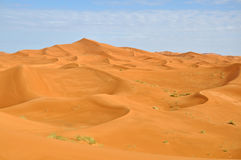 Sahara öken Royaltyfria Foton
