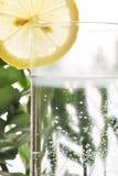 Fotoet av exponeringsglas av vatten och citronen i det med några gröna växter, vit isolerade bakgrund Arkivbild