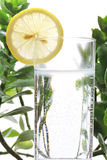 Fotoet av exponeringsglas av vatten och citronen i det med några gröna växter, vit isolerade bakgrund Royaltyfri Bild