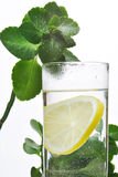 Fotoet av exponeringsglas av vatten och citronen i det med några gröna växter, vit isolerade bakgrund Royaltyfria Foton