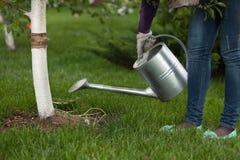 Fotoet av kvinnainnehavmetall som bevattnar kan på det trädgårds- near trädet Arkivfoto
