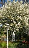 Fotoet av vårlandskapbakgrund av en dekorativ blomning parkerar Royaltyfria Bilder