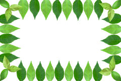 Fotofeld der Blätter Stockfotos