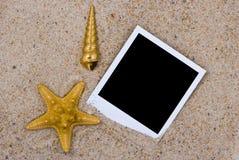 Fotofeld mit goldenen Seeshells Stockfotos