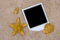 Fotofeld mit goldenen Seeshells Stockbilder