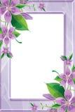 Fotofeld mit purpurroten Blumen Stockfotografie