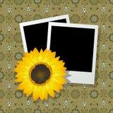 Fotofelder mit Sonnenblume Lizenzfreies Stockfoto