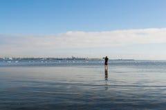 Fotograaf die beelden van een groep zwanen nemen Stock Afbeelding