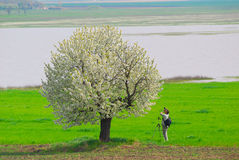 Fotograaf die de lenteboom fotografeert Stock Afbeelding