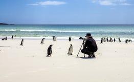 Fotograaf met pinguïnen in de Falkland Eilanden eiland-2 Stock Foto