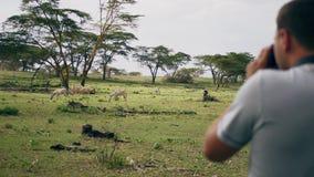 Fotograaf Takes Pictures On de Camera van Wilde Zebras in het Afrikaanse Bezwaar stock footage