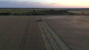 Fotografía aérea con una máquina segador del abejón que trabaja en un campo de trigo en la puesta del sol metrajes