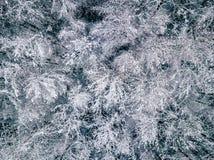 Fotografía aérea de un bosque en invierno Foto de archivo libre de regalías