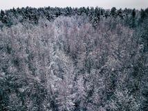 Fotografía aérea de un bosque en invierno Fotos de archivo libres de regalías