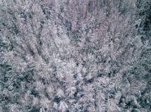 Fotografía aérea de un bosque en invierno Fotos de archivo
