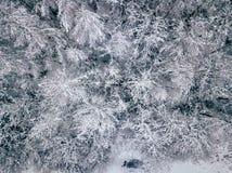 Fotografía aérea de un bosque en invierno Foto de archivo